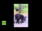 USA: Hiker escapes unharmed after dangerous encounter with black bears