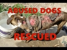 Top 8 Animals Rescued in this compilation #1