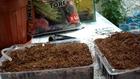 Akvaryum Bitki Tohumu Yetiştirme (Çimlendirme)