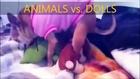 ANIMALS vs. DOLLS - Sexy Mating  FAIL Compilation 2014 - الحيوانات الجنس