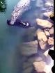 Cocodrilo en puerto Vallarta se come un perro