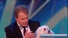 Really talking Dog in X factor